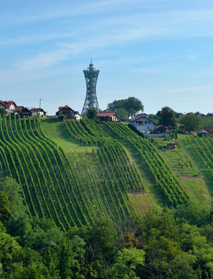 Festival Vinarium, Grape Harvest — Lendava, Eastern Slovenia