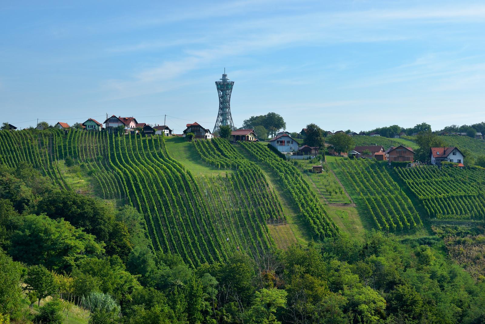 Vineyards and Vinarium Tower in Lendava, Slovenia