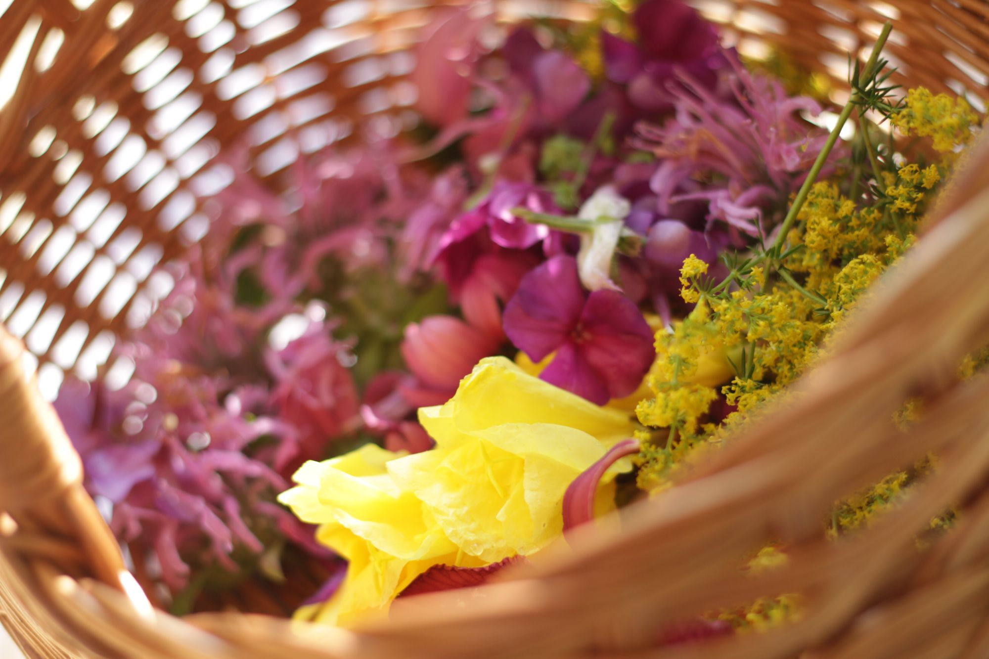 Basket of wild edible flowers