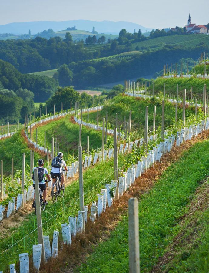 Grossmann Film and Wine Festival – Ljutomer, Northeastern Slovenia