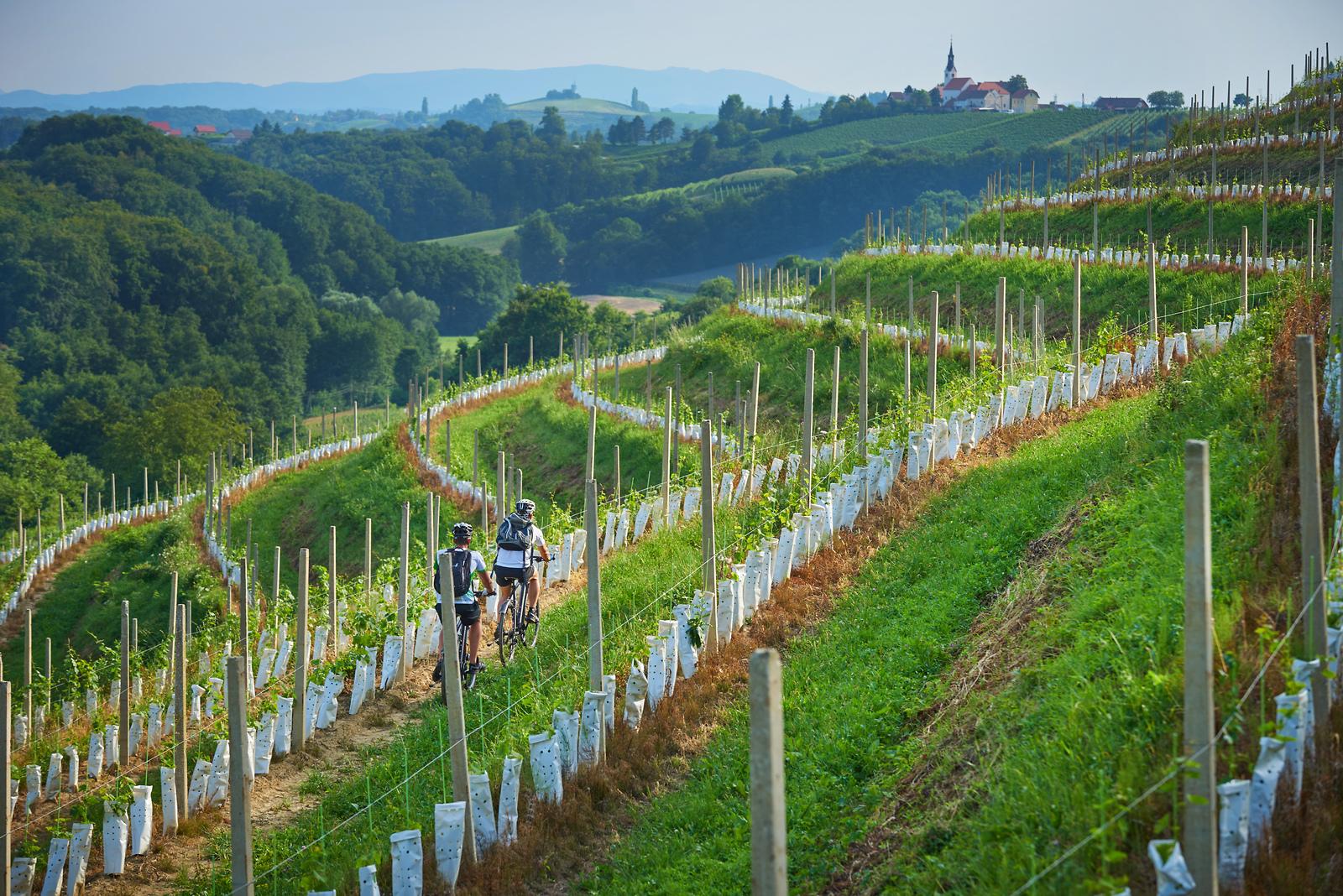 Wineyards of Jeruzalem in eastern Slovenia