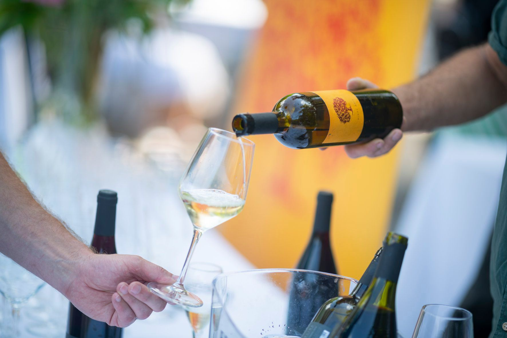 A winemaker pours white wine into a wine-taster's wine glass