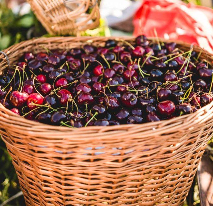 Cherry Festival – Brda, Western Slovenia