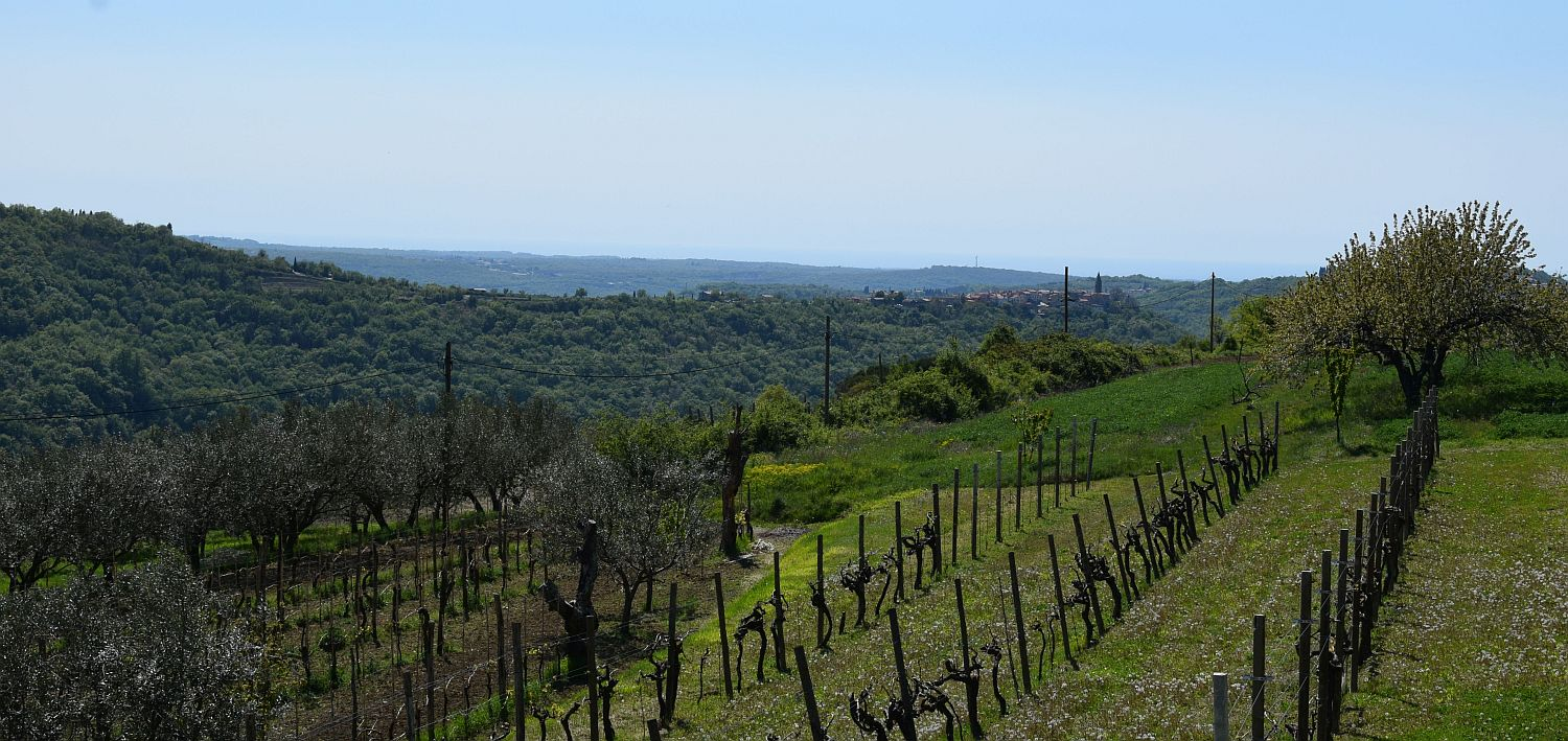 View over vineyards from Santomas Winery